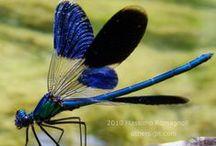 Dragonflies & Butterflies