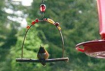 Hummingbird Swings