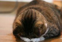 cat :) / i love cat