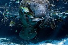 Ocean Life Photography