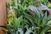 Garden Things / Ideas and varieties of plants, things I might like in my gardens. / by Amanda Bielski-Wright