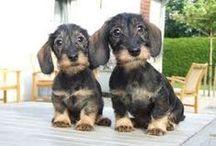 Trop mignon! / Mon chien Dudu et bien d'autres qui sont vraiment mignons!!