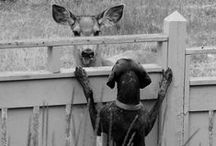 Animals / by Kelly SweetPea