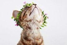 cats / meow meow meow