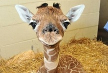 Cute Animals / by Leanna Edwards