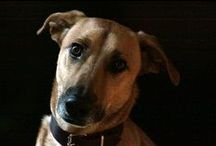 Hond Jaros