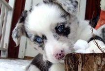 <3 Puppies / Szczeniaczki, pieseczki, duże i małe <3