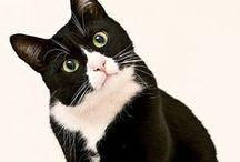 <3 Kittens / Koty, kociaki, duże i małe, puchate kuleczki <3