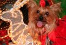 ヨーキー…yorkshire terrier♡