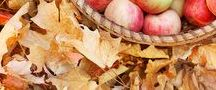 sweet melancholy autumn /  sweet melancholy season .... a sense of warmth and sleep ... amazing colors