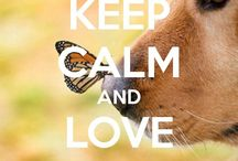 <Dogs> / This board is about dogs in general and especially about our beautiful and cute Golden Retriever; Angie..