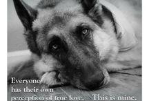 Dogs / Dogs, mainly German Shepherds :-) / by Liz Pinkney