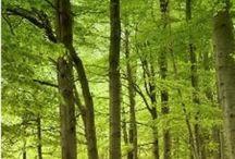 Ymppä - metsä