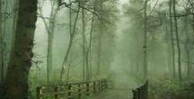 WALD geheimnisvoll und diffus / Dunkler geheimnisvoller Wald, Stoff für Märchen, Rotkäppchen, Schwarzwald, Nature pur, Wald & Wiese, Tiere des Waldes und Vegetation