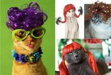 Wig Out Party / A new, fun party theme, Wig Parties are quickly growing in popularity. Simply buy an assortment of wigs or have guests BYOW (bring your own wig) and get the party started! Guests can have fun trying on different wigs and personalities.
