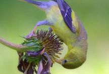 Feathered Friends / The flying kind! / by Patricia Jones