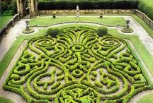 TOPIARY ART & MOSS / The Art of clipping Shrubs, Flowers & Other into Ornamental Shapes. / by Patricia Jones