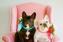 Puppy Love / by Becca