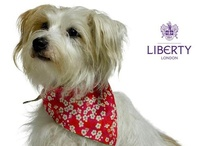Exclusive Liberty London Mitsi Collection / London's only canine fashion house, LoveMyDog, has teamed up with fashionable department emporium Liberty to create an exclusive range of coats, collars, leads, bandanas, beds and blankets.  A must-have for handsome hounds and four-legged fashionistas, the best-of-British Mitsi collection is hand-stitched in London from Liberty cotton and Harris Tweed.