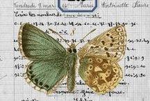 Paper aRT / ... / by Beth Drees-Hooser