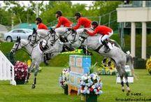 Horseback Riding / Equestrian Life  / by Becca