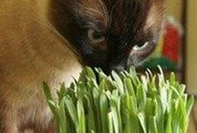 Animal Testimonials / Made from a proprietary blend of 100% organic barley, oats, wheat and rye, Priscilla's Pet Grass is enjoyed by all pets large and small.