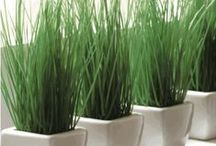 Home Decor with Cat Grass / See how cat grass and decorative planters can enhance your home decor project.  / by Priscilla's Pet Products