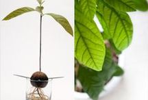 Indoor Plants & Ideas