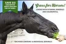 Horses / Horses go crazy for our grass ~ and now Priscilla's for Horses is available as a subscription service so you can have the easy to grow grass delivered to you every month! This horse treat is a special blend of grain seeds and is fun, fast and easy to grow!