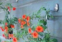 Bahçem / geridönüşüm