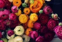 J'adore Le Fleur / Flowers for all occasions!