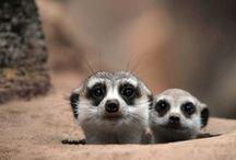 Animal pals ❤