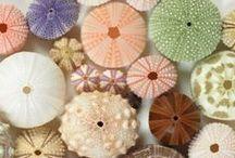 Shells and sea glasses
