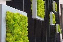 Garden:Vertical Garden