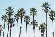 Palms / Beautiful palm trees of all shapes and sizes