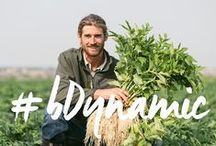 #bDynamic / #bDynamic is an expression of love for the land and our way of farming. We're living dynamically by bringing you our freshly prepared herbal tonics made with biodynamic ingredients. They're lively and dynamic, just like us. #biodynamictonics #biodynamicfarming #oregonswildharvest