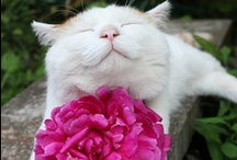 Flower me with Love :) / by Kim Sinclair