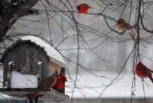 gevederde vrienden / allerlei vogels