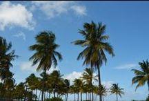 [ Florida - USA ] / Everything about traveling to Florida