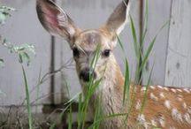 CountryWood Wildlife