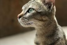 Cats / Cats pictures