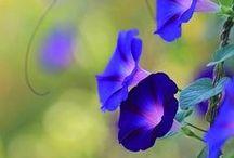 Les Belle Fleurs / by Malissa Edwards