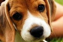 Beagle Love / by Malissa Edwards