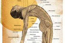 3. Āsana | Posture / Asana, the third limb of Yoga, is the postures. Exploring the anatomy, function, and form of specific yoga poses.