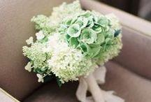 Flower / by Dasom Lim