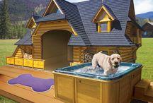 DOG TREATS,CLOTHES,RECIPES ect.... / recipes,clothes,houses ect....