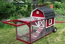 Chicken house +poules