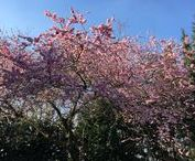 Frühlingsgefühle / Das Ruhrgebiet in Frühlingsstimmung getaucht. Lasst Euch inspirieren.
