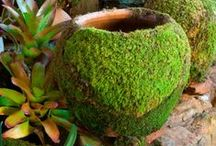 mossy moss!!! / love it's green color.. / by Emma Arenas