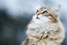 Top Cat / The best pets of the week